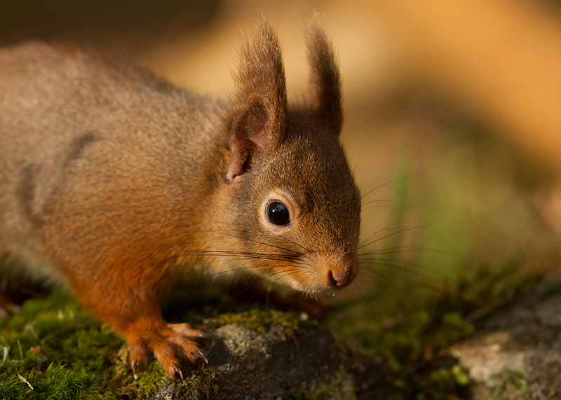 Red Squirrel Photography Hide