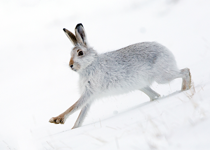 Winter Wildlife Photography